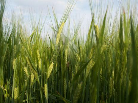 Arable farming 4